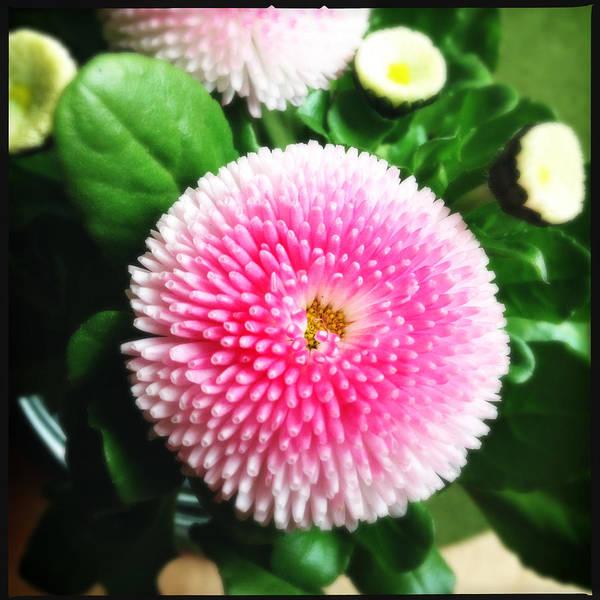 Green Wall Art - Photograph - Pretty Pink Flower by Matthias Hauser