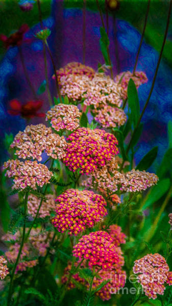 Photograph - Pretty Pink Yarrow In An Abstract Garden Artwork By Omaste Witkowski by Omaste Witkowski
