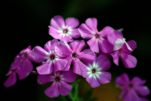 Photograph - Pretty Purple by CE Haynes