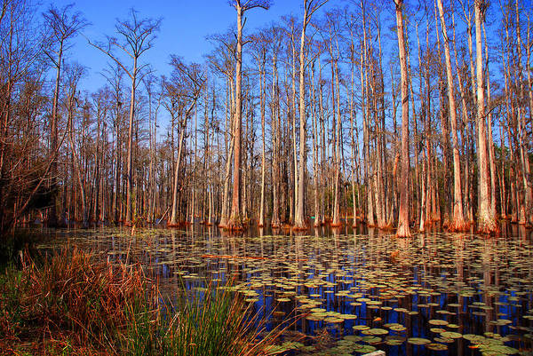 Photograph - Pretty Swamp Scene by Susanne Van Hulst