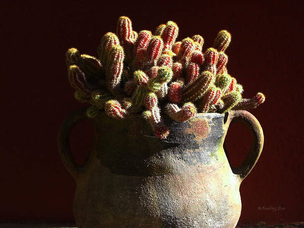 Photograph - Prickly Padres by Xueling Zou