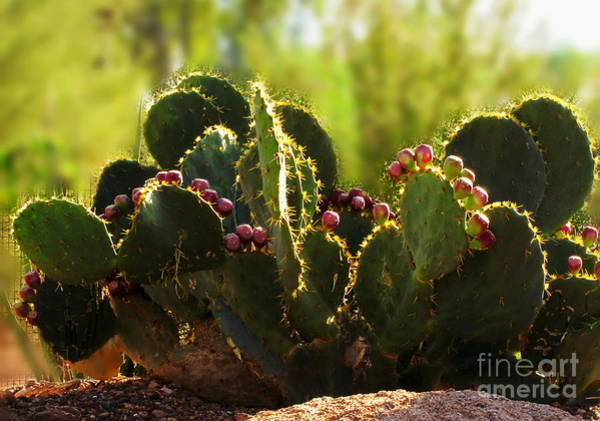 Photograph - Prickly Pear And Fruit by Marilyn Smith