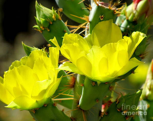 Photograph - Prickly Pride by Marilyn Smith