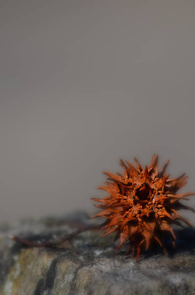 Photograph - Prickly Thing by Beth Sawickie
