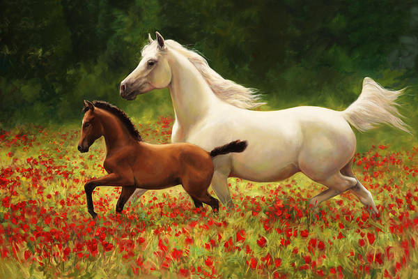 Arabians Painting - Pride And Joy by Laurie Snow Hein