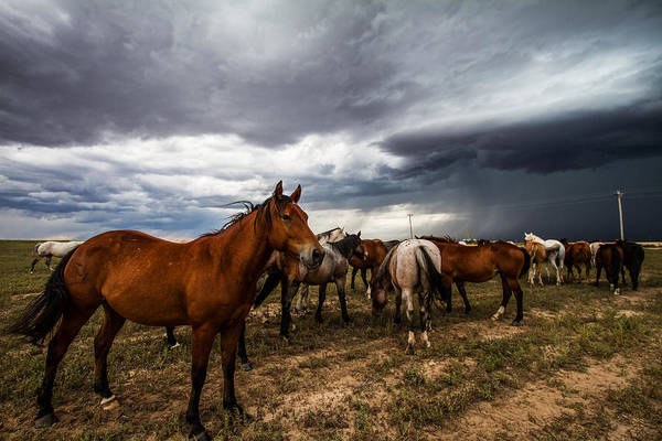 Southern Pride Wall Art - Photograph - Pride - Horse Watches Over Herd In Oklahoma by Southern Plains Photography