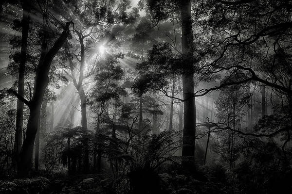 Wall Art - Photograph - Primary Forest by Mathilde Guillemot