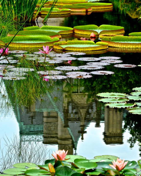 Lilly Pad Photograph - Prince Charmings Lily Pond by Frozen in Time Fine Art Photography