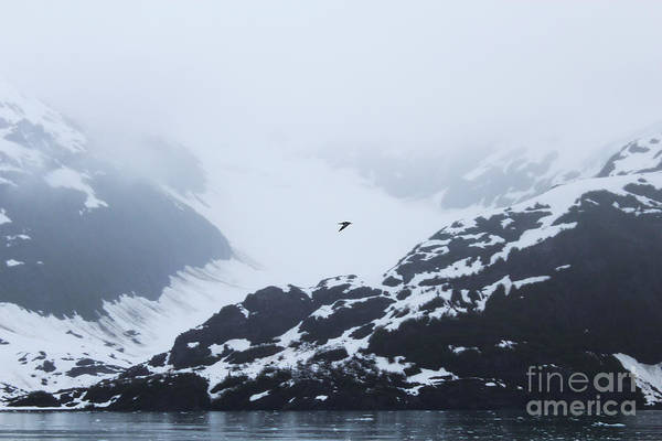 Photograph - Prince William Sound by Kate Avery
