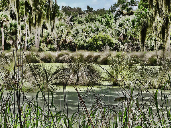 Photograph - Princess Place Swamp by Alice Gipson