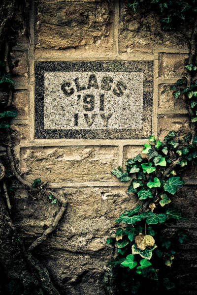 Wall Art - Photograph - Princeton - Class Of 91 Ivy by Colleen Kammerer