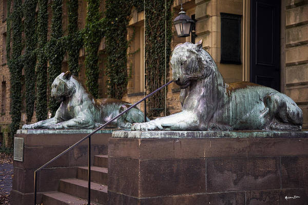 Wall Art - Photograph - Princeton Tigers by Madeline Ellis