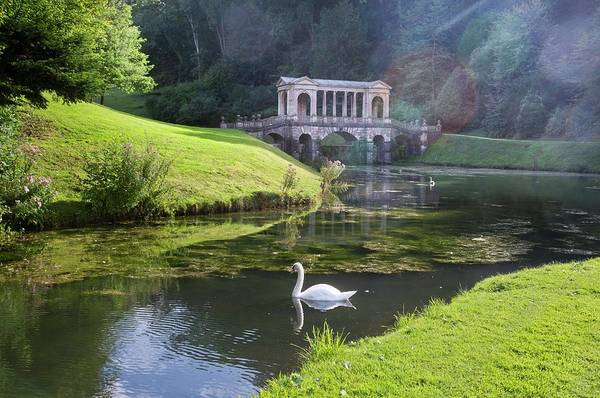 Mute Swan Photograph - Prior Park by Bob Gibbons