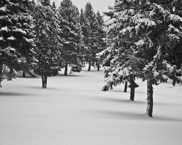 Photograph - Pristine Snow Win 60 by G L Sarti