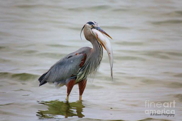 Photograph - Prize Catch by Barbara Bowen