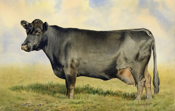 Wall Art - Painting - Prize Dexter Cow by Anthony Forster