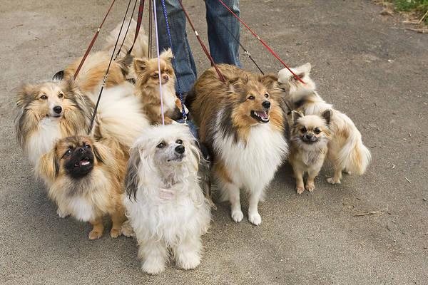 Dog Walker Photograph - Professional Dog Walker by Jean-Michel Labat