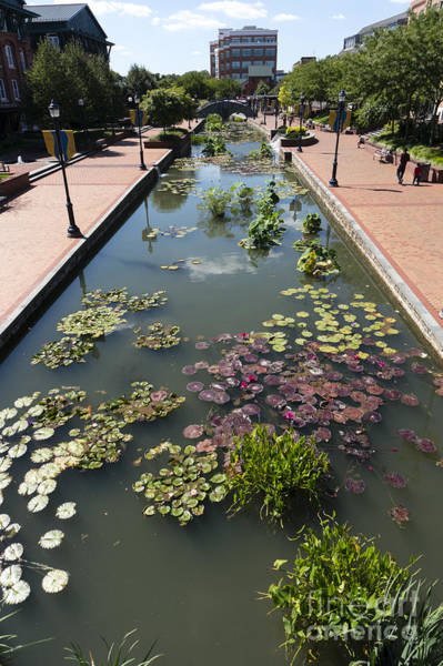 Photograph - Promenade And Water Lilies In Carroll Creek Park In Frederick Md by William Kuta