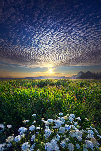 Photograph - Promise Fulfilled by Phil Koch