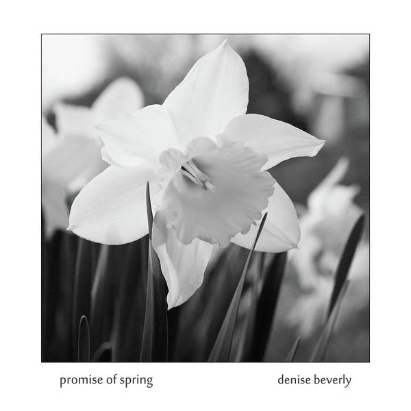 Photograph - Promise Of Spring by Denise Beverly