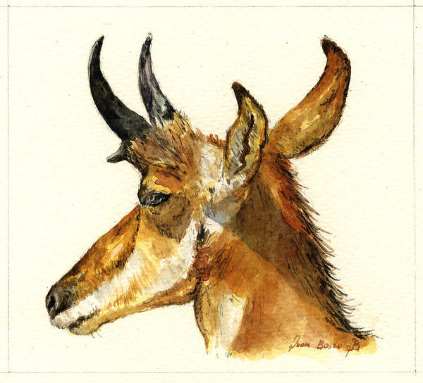 Wall Art - Painting - Pronghorn Antelope by Juan  Bosco