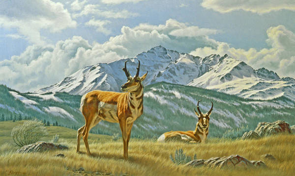 Wall Art - Painting - Pronghorn Below Electric Peak by Paul Krapf