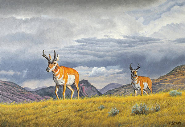 Wall Art - Painting - Pronghorn-coming Over The Rise by Paul Krapf