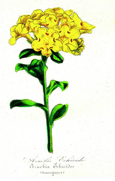 1855 Photograph - Prophet's Flower by Collection Abecasis/science Photo Library