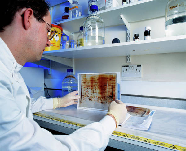 Researcher Wall Art - Photograph - Proteomics Research by Medical School, University Of Newcastle Upon Tyne/simon Fraser/science Photo Library