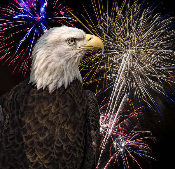 Photograph - Proud And Free 2 by Penny Lisowski