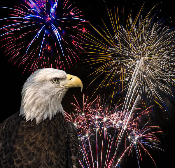 Photograph - Proud And Free 7 by Penny Lisowski