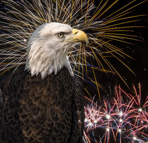 Photograph - Proud And Free by Penny Lisowski