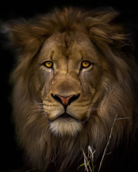 Big Cat Wall Art - Photograph - Proud by Cheri McEachin
