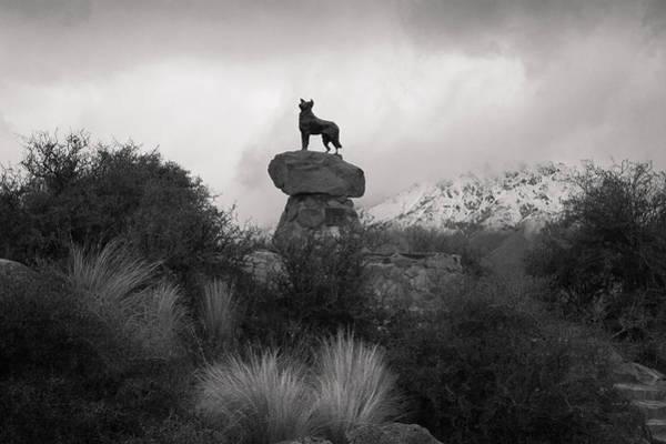 Photograph - Proud Dog by Jenny Setchell