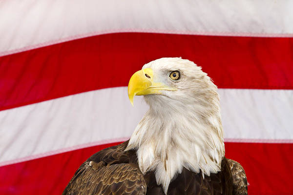 Wall Art - Photograph - Proud Eagle by Rebecca Cozart