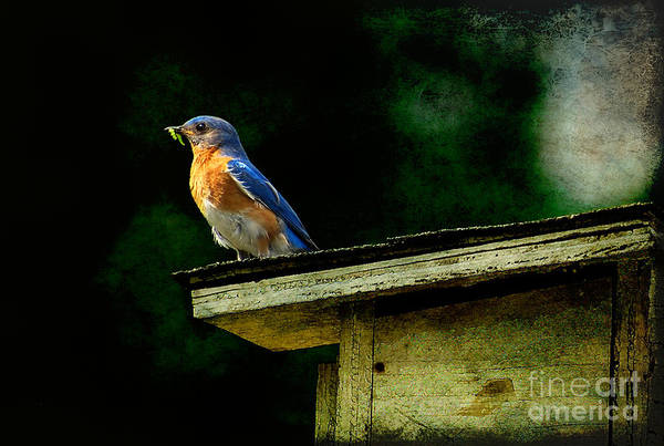 Photograph - Proud Provider by Lois Bryan