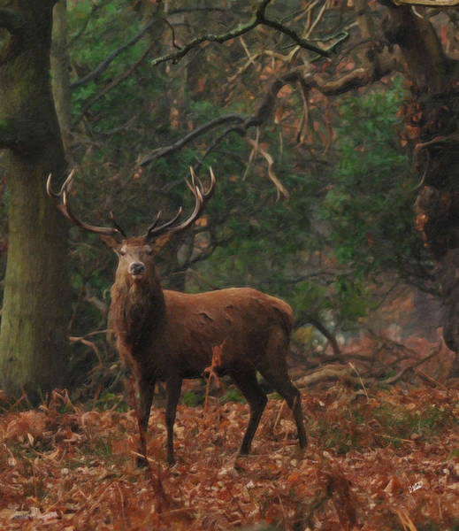 Painting - Proud Red Stag In Forest by Dean Wittle