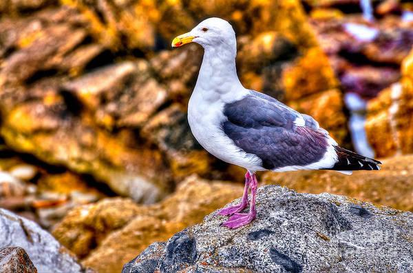 Wall Art - Photograph - Proud Thayer Gull by Jim Carrell