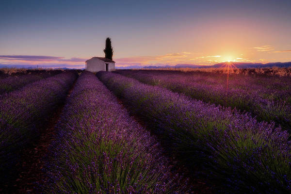 Farmhouse Photograph - Provence Lavender by Donald Luo