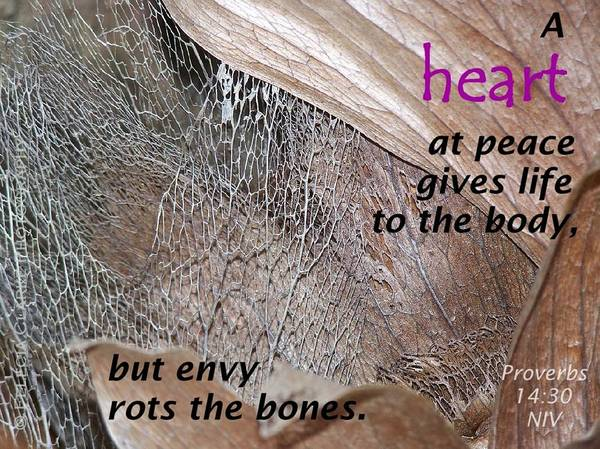 Staghorn Fern Photograph - Proverbs 14-30 by Felecia Clarke