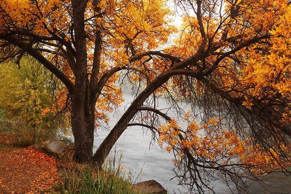 Photograph - Provo Autumn #2 by TL  Mair