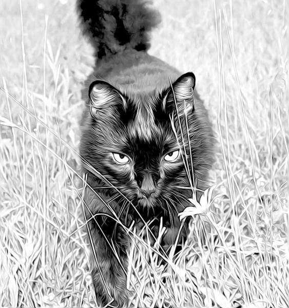 Photograph - Prowl by Meghan OHare
