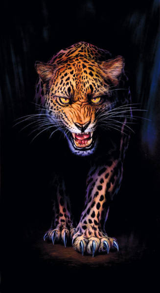 Andrew Farley Photograph - Prowling Leopard Crop 1 by MGL Meiklejohn Graphics Licensing