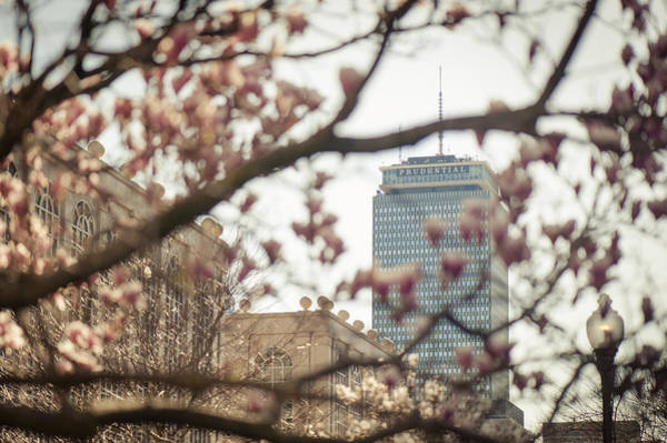 Wall Art - Photograph - Pru Blossom by Andrew Kubica