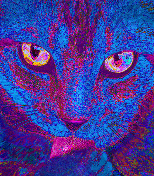 Neon Pink Photograph - Psychedelic Kitty by Jane Schnetlage