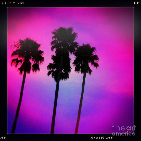 Photograph - Psychedelic Palms by Denise Railey