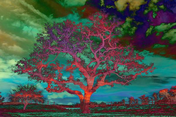 Photograph - Psychedelic Sentinel Red by Jemmy Archer