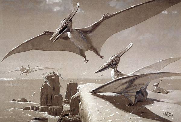 Cretaceous Wall Art - Photograph - Pteranodon Pterosaurs by Natural History Museum, London/science Photo Library