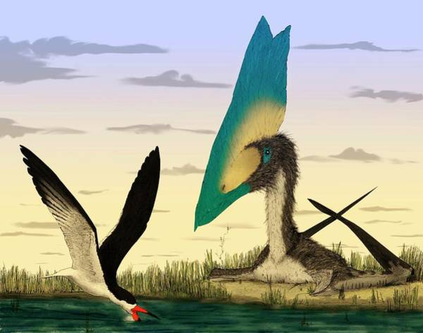 Skimmers Photograph - Pterosaur And Skimmer Bird by Mark P. Witton/science Photo Library