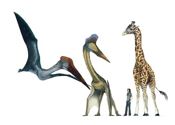 Wall Art - Photograph - Pterosaur Size Comparison by Mark P. Witton/science Photo Library